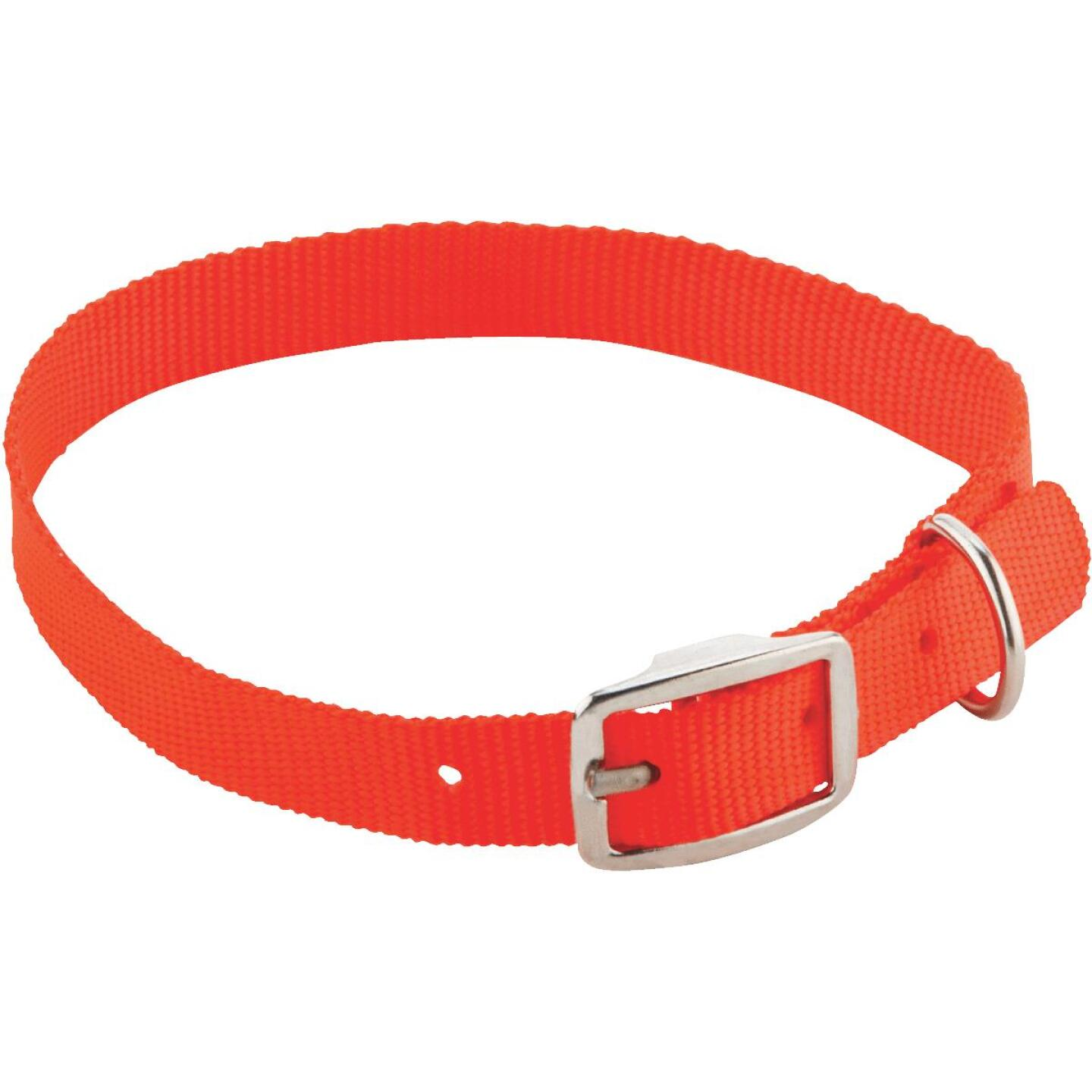 Westminster Pet Ruffin' it 24 In. Nylon Dog Collar Image 1
